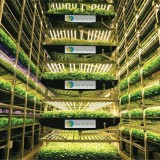 Our client @aerofarms is partnering with @jerseycitynj and @worldeconomicforum to launch the first-ever Vertical Farming Program to address food deserts, inequity in food access, and education. We're proud to...